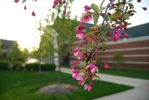 Spring flowers on campus by chapel