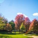 Virtual Background - Fall