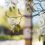 Virtual Background - Spring
